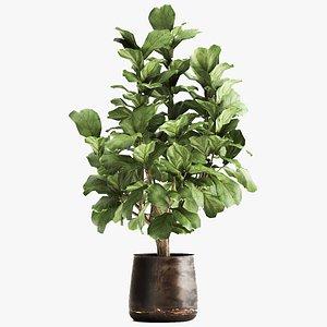Ficus lyrata in a rust pot for the interior 1040 3D model