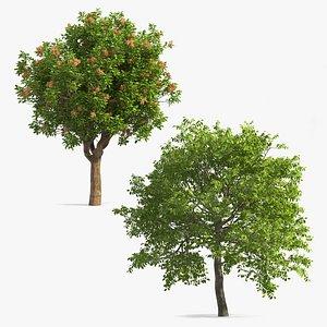 nuts tree plant 3D model