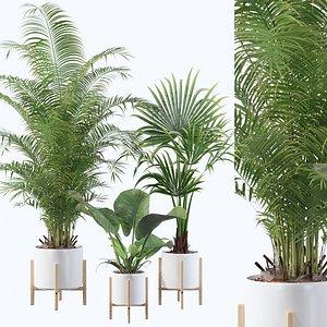 palm areca plant model