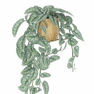 plant vine scindapsus 3D model