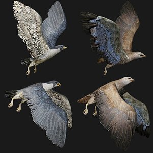 3D hawk bird model