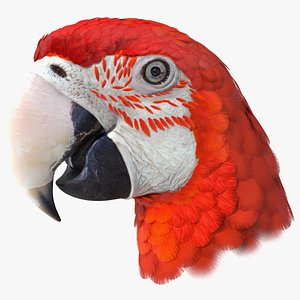 3D Red and Green Macaw Parrot Head