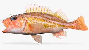 greenstriped rockfish fish 3D