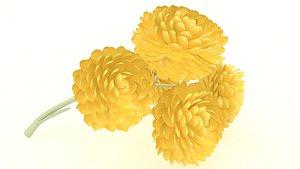 Immortelle flower blossom cosmetics 3D model