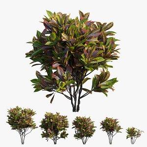 3D model Croton plant set 14