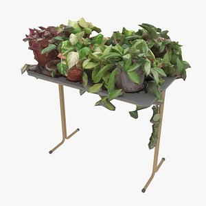 3D Pot Plants on Table model