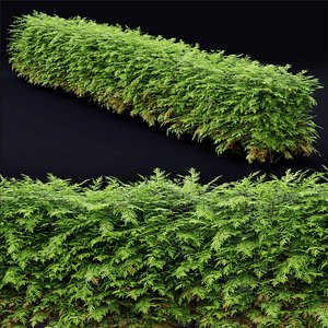 thuja hedge 3D model