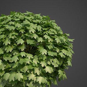 3D model plants norway maple pbr