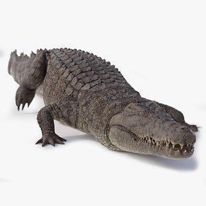 3D model Nile Crocodile ANIMATED
