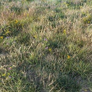 grass dry lawn 3D model