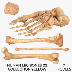 3D model Human Leg Bones 02 Collection Yellow - 5 models