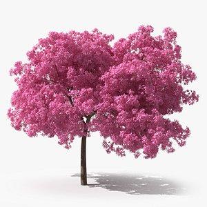 Pink Lapacho Tree 3D model