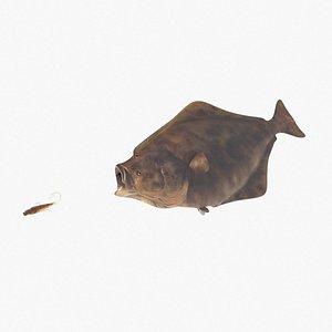 3D halibut fish model