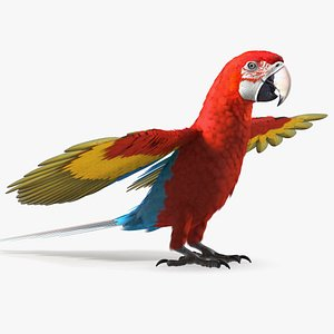 3D Red and Green Macaw Parrot Neutral Pose model