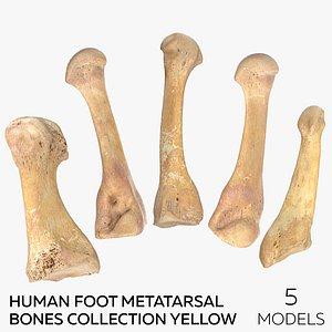 Human Foot Metatarsal Bones Collection Yellow - 5 models 3D model