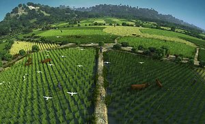 3D Rice field crops rice country farm crops
