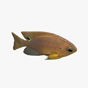 fish damsel damselfish 3D model