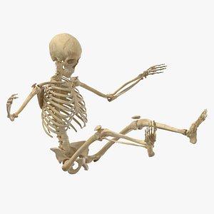 real human female skeleton 3D