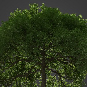 3D 2021 PBR English Oak Collection - Quercus Robur