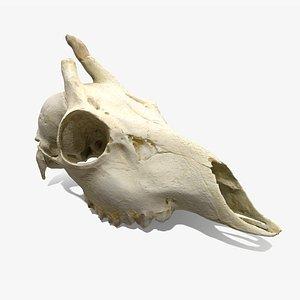 skull deer model