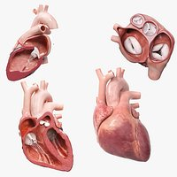 Heart Pack Animated