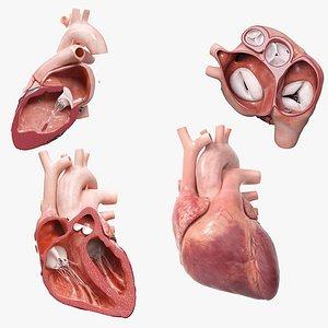 Heart Pack Animated model