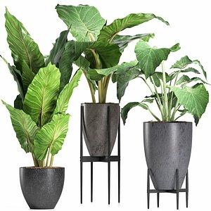 plants 210 alocasia 3D model