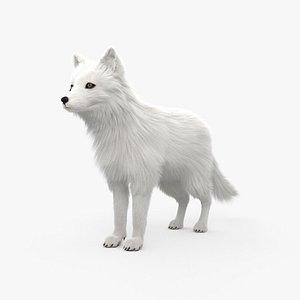 3D model Arctic Fox HD