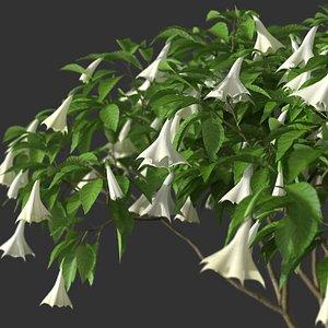 XfrogPlants Angel's Trumpet - Brugmansia Arborea model