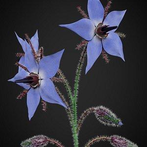 3D borage flower