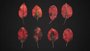Red Robin Photinia Leaves 4K Scanned 3D