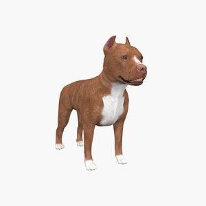 3D pit pitbull bull model