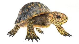 tortoise rig 3D model