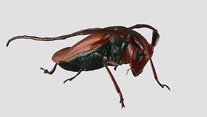 3D Cockroach model
