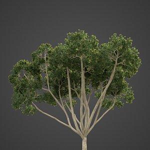 3D tree nature