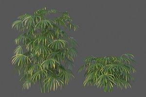 XfrogPlants Bamboo Palm - Rhapis Excelsa 3D