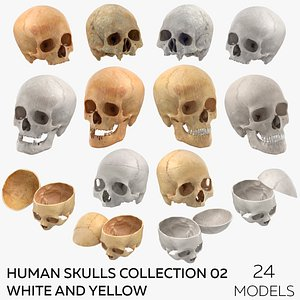 Human Skulls Collection 02 White and Yellow - 24 models 3D