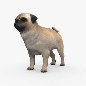 3D model Pug HD