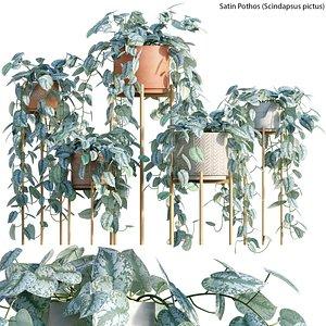 Scindapsus pictus - Satin Pothos 3D