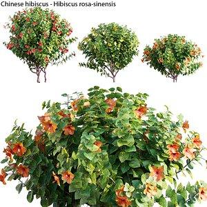 3D Hibiscus rosa 04