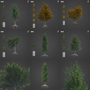 3D 2021 PBR White Poplar Collection - Populus Alba model