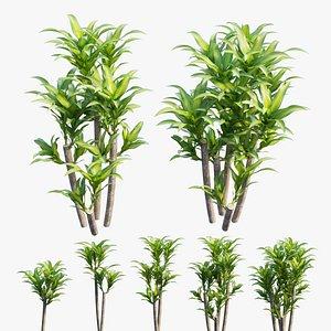 3D Dracaena Corn Plant set 04