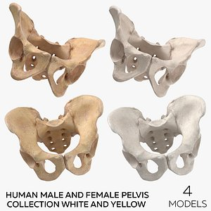 Human Male and Female Pelvis Collection White and Yellow - 4 models 3D model