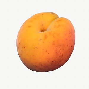 05 hy apricot fruit model