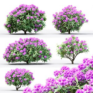 3D rhododendron bushes model