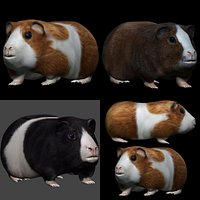 fully rigged low poly  Guinea pig and hamster Collection
