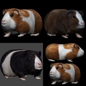 3D fully rigged low poly  Guinea pig and hamster Collection