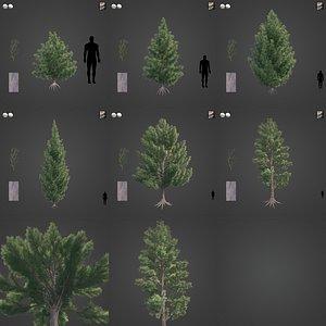 3D 2021 PBR Red Juniper Collection - Juniperus Virginiana