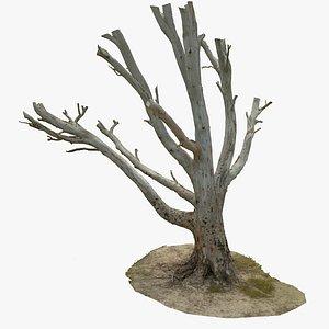 Tree Scan Ultra HQ mesh 6x16k Textures model