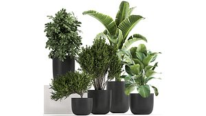 plants decorative flower 3D model